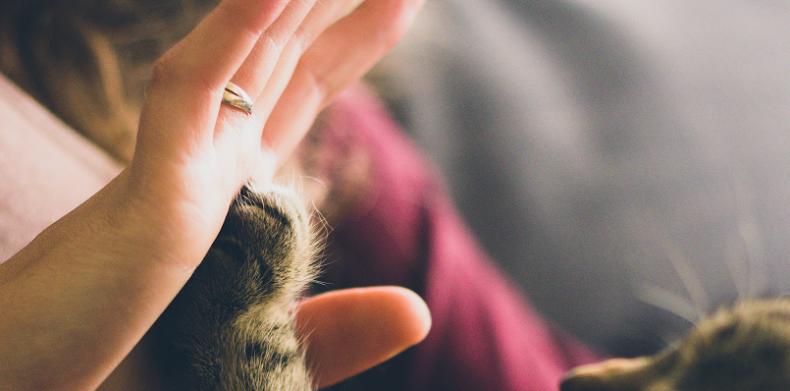 除了提高罰則,最有效幫助減少動物虐待事件的方式是加強尊重生命的意識