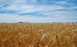 遠離糧食危機?半數民眾抱持悲觀態度